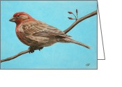 House Finch Greeting Cards - House Finch Greeting Card by Crista Forest
