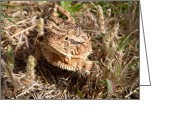 Horned Lizard Greeting Cards - I can pose for you Greeting Card by Christena  Stephens