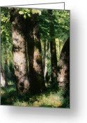 The Glade Greeting Cards - In the Forest of Fontainebleau Greeting Card by Pierre Auguste Renoir