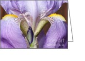 Beautiful Flowers Greeting Cards - Iris Greeting Card by Carol Groenen