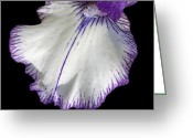 Ann Powell Greeting Cards - Iris Petal photograph Greeting Card by Ann Powell