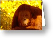 Orangutans Greeting Cards - It Is Hard Being A Primate  Greeting Card by Jeff  Swan