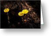 Wildflower Greeting Cards - It only takes a little bit of light Greeting Card by Bob Orsillo