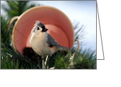 Titmouse Greeting Cards - Jackpot Bird Greeting Card by Christina Rollo