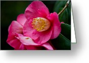 Theaceae Greeting Cards - Japanese Camellia-the official state flower of  Alabama Greeting Card by Eti Reid