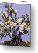 Clump Greeting Cards - Japanese Flowering Bonsai Greeting Card by Julie Palencia