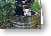 Mick Anderson Greeting Cards - Johnny in the Barrel Greeting Card by Mick Anderson