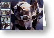 Mutt Greeting Cards - Just call me Dog Greeting Card by Linda Lees