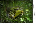 Frog Art Greeting Cards - Kiss My Happiness Frog Greeting Card by Christina Rollo