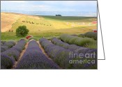 Carol Groenen Greeting Cards - Lavender Valley Greeting Card by Carol Groenen