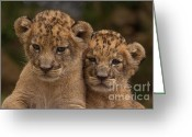 Khao Greeting Cards - Lean on Me Greeting Card by Ashley Vincent