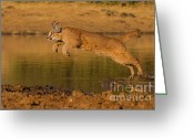Leap Greeting Cards - Leap of Faith Greeting Card by Ashley Vincent