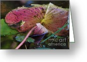 Lily Pad Greeting Cards Greeting Cards - Lily Pad Beauty Greeting Card by Joy DiNardo Bradley         DiNardo Designs