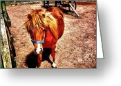 Original Equine Portrait Photo Greeting Cards - Little Pony Greeting Card by Annie Zeno