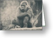 Primates Greeting Cards - Looking So Sad Greeting Card by Laurie Search