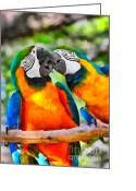 In Love Greeting Cards - Love Bites - Parrots in Silver Springs Greeting Card by Christine Till