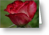 Mick Anderson Greeting Cards - Love is a Red Rose Greeting Card by Mick Anderson