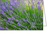 Carol Groenen Greeting Cards - Lovely Lavender Greeting Card by Carol Groenen