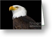 Barbara Mcmahon Greeting Cards - Magestic Bald Eagle Greeting Card by Barbara McMahon