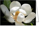 Carol Groenen Greeting Cards - Magical Magnolia Greeting Card by Carol Groenen