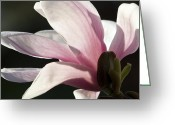 Michael Friedman Greeting Cards - Magnolia II Greeting Card by Michael Friedman