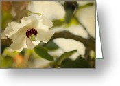 Magnolia Greeting Cards - Magnolia Greeting Card by Rebecca Cozart