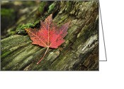 Red Maple Greeting Cards - Maple Landing Greeting Card by Christina Rollo