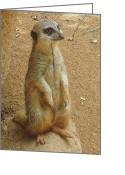 Standing Meerkat Photo Greeting Cards - Meerkat Greeting Card by Rachel Munoz Striggow