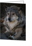 Featured Reliefs Greeting Cards - Mexican Gray Wolf Greeting Card by Albert Lipsey