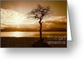 Loch Greeting Cards - Milarochy Bay Tree Loch Lomond Greeting Card by John Farnan