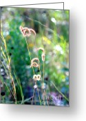 Carol Groenen Greeting Cards - Mississippi Nature 1 Greeting Card by Carol Groenen