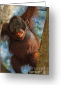 Primates Greeting Cards - More Than a Mouthful Greeting Card by Ashley Vincent