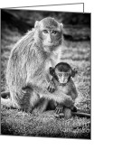 Protective Mother Greeting Cards - Mother and Baby Monkey Black and White Greeting Card by Adam Romanowicz