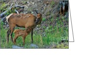Protective Mother Greeting Cards - Mother Elk and Fawn in Yellowstone Greeting Card by Linda Albonico