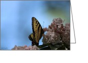 Designer Butterfly Works Photo Greeting Cards - Mountain Larual Butterfly Greeting Card by Debra     Vatalaro