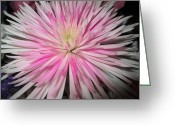 Diannah Lynch Greeting Cards - Mum Explosion Greeting Card by Diannah Lynch
