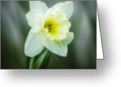 Seasonal Greeting Cards - Narcissus pseudonarcissus Greeting Card by Erik Brede