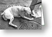 French Bulldog Prints Greeting Cards - Newsworthy Dog in French Quarter Black and White Greeting Card by Kathleen K Parker