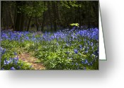 Blue Flowers Greeting Cards - Odd One Out Greeting Card by Svetlana Sewell