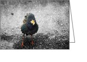 Little Bird Greeting Cards - Oh Starling Greeting Card by Steven  Michael