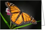 Monarchs Greeting Cards - Open Wings Monarch Greeting Card by Christina Rollo