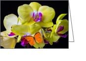 Exotic Orchid Greeting Cards - Orange butterfly and yellow orchids Greeting Card by Garry Gay