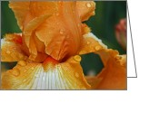 Elizabeth Rose Greeting Cards - Orange Iris in the Rain Greeting Card by Elizabeth Rose