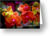 Orchids Greeting Cards - Orchid Melody Greeting Card by Karen Wiles