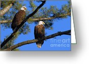 Larry Ricker Greeting Cards - Pair of Eagles Greeting Card by Larry Ricker