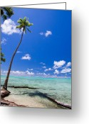 Sunny Days Greeting Cards - Palm Tree in Paradise Greeting Card by Sue Blythe