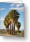 Barren Greeting Cards - Palm trees Greeting Card by Jane Rix