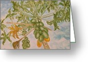 Papaya Greeting Cards - Papaya Greeting Card by Dharma Somashekar