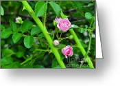 Al Powell Photography Usa Greeting Cards - Parallel Vines Greeting Card by Al Powell Photography USA