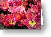 Jenny Rainbow Greeting Cards - Parrot Tulips. The Tulips of Holland Greeting Card by Jenny Rainbow